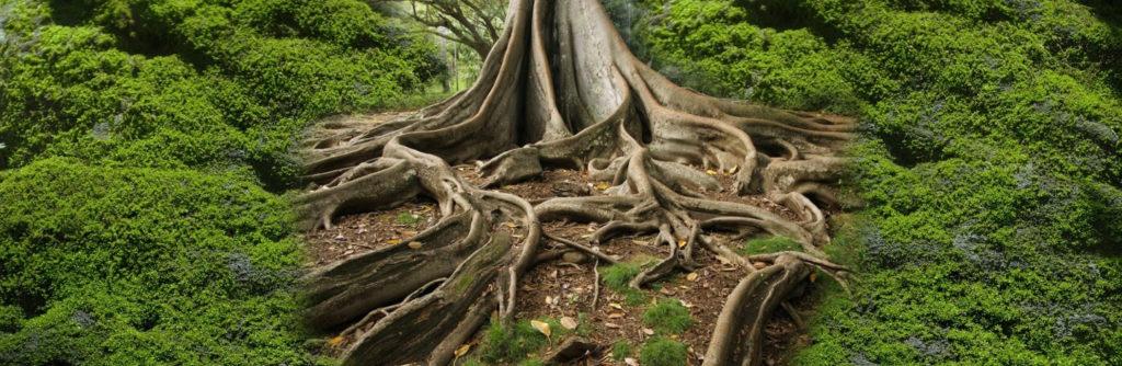 racines du succès